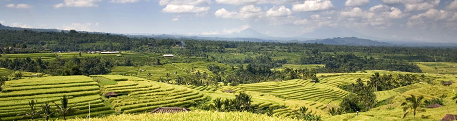 aspaba-rice-terrace